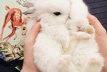 Bunnies n stuff