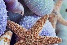 Beach life / Rantaelämää. Hiekkaa, simpukoita ja meri. <3 Sand, seashells and sea.