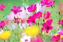 Beautiful summer / Kaunis kesä. Iloisia kesäkukkia, muutama perhonen ja leppäkerttuja. Muun muassa. -                                                                                     Happy summer flowers, few butterflies and ladybirds. Among other things.
