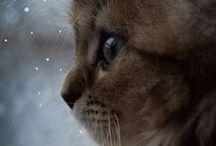 Cats / Cute, pretty & funny.