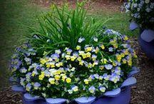 Virágok / világszép virágok