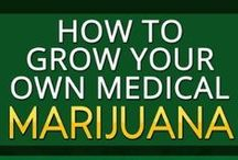 How to grow Marijuana / Everything about the cultivation of cannabis / marijuana