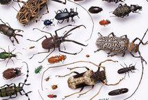 Örümböcek / Herşey araknafobia üzünden