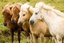 Konie, kuce, źrebięta, o tak! c;