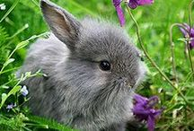 Bunny Rabbits / Bunny rabbits are some of the best pets. / by Jenny Kline