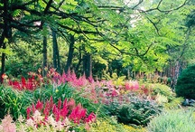 Delightful Gardens / by Denise Opperman