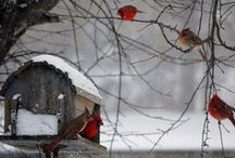 Just another Winter's Day..... / coping with daily life in the snow / by Denise Opperman