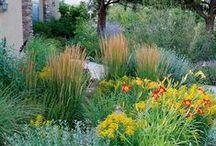 Gardening / by Nancy K Compton