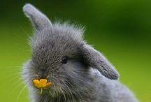 Rabbits & Squirrel / rb-sq