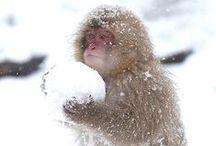 Monkeys / mk