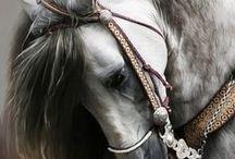 hästar / by Birgitta Kjellström