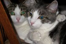 My Cats and Dogs... / Animals  ( fur babies )