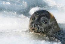 Sealife / Sealife