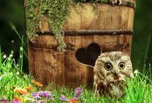 Owl.... 0.0