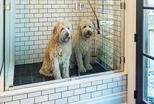 PETS / A house is not a HOME without a PET