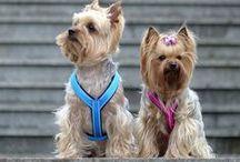 Dog harnesses / Szelki dla psów
