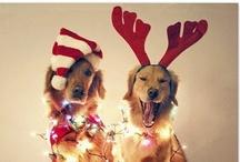 Christmas Holiday / #Christmas   Christmas Decorations   #Holiday Foods   Holiday   Holidays
