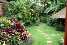 Tropical Garden Dreams / I'm dreaming of turning my little garden (735 m2) into a more tropical looking garden. Only problem is that I live in Denmark where we sometimes have down to -20 degrees C!
