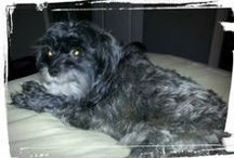 I LOVE My Pet! / Functional Pathways' Employees' Pets!