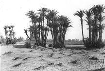 Across Morocco, Century XIX,  photographies by A. Cavilla. / Photographies of Anthony Cavilla, photographer born in Gibraltar in 1867.  He had his Studio in Tangier until 1908, where he died.