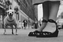 Elliot Erwitt   Dogs / A sublime snapshot of the world of Elliot Erwitt  / by Felt & Beautiful