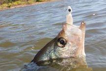 Fishing, Fish / Rybaření, ryby a vše kolem