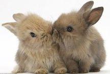 SO CUTE / Cutest animals evaa