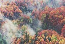 The Rain of Autumn