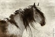 Wild Horse Collection / There's nothing more beautiful, healthy and strong, than a wild horse in their natural state.
