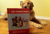 Dog Books...Training, for Kids and More / A variety of dog books. Several by me :) #dog #books