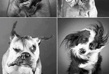 Funny/Cute/Cats/Dogs / by Liad Goldsmith
