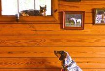 Dogs & Cats / Dogs and cats...cats and dogs. #cats #dogs