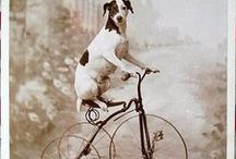 Vintage Dog / The dog throughout history in illustrations, photographs, artwork and more. #dogs #vintage #history
