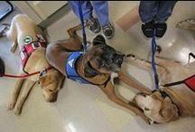 """Therapy Dogs / Therapy dogs are pets that love to interact with people and be petted. They visit patients in hospitals, nursing homes, hospice, participate in """"Read to a Dog"""" programs at schools and libraries, and more. #therapydogs #dogs"""