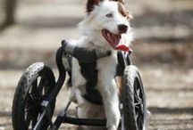 Disabled Dogs / Adopt a special needs dog today, and give a home to one in need. - #dogs #disableddogs #handicappedpets