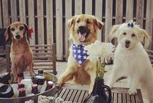 Dogs & Holidays / Don't dogs and Holidays go together? Of course! #dogs #holidays
