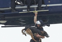 Police Dogs / Police dogs from around the US and the world. #police #dogs