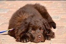 Aspen Dogs / Dogs in Aspen, Colorado. January 2013. #dogs #aspen #colorado