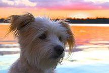 Nora Arden / Nora Arden. #dogs #mixedbreeds