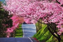 Aaah....Spring! / by Isye Whiting