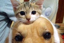 Dogs Hangin' with Cats / Or is it Cats Hangin' with Dogs? #cats #dogs