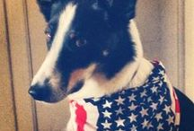 Dogs & Politics / Didn't you know dogs and politics mix? #dogs #politics