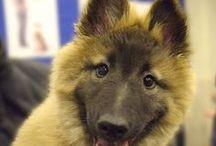 Dog Breeds / Dog breeds from around the world. #dog #breeds