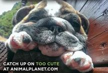 Animal Planet's Too Cute / Tune in for TOO CUTE and witness the world of puppies and kittens as they never have before with unprecedented footage and never-before-seen clips of the early lives of dogs and cats. This series contains material that is just too cute! It is a world where cuddly knows no bounds and a place where fluffy reigns supreme.