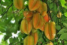 ABC's of Oxalidaceae / Starfruit, blimbi, cucumber tree fruit, carambola, oca,  / by Isye Whiting