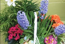 Easter: Flower-filled baskets / Delight in dressing up your home with colorful blooms and Easter treats!