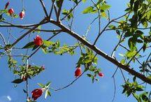 Jardineria / Amor a la Naturaleza, las plantas, los jardines, técnicas, Arboles...