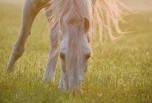 HORSE-INSPO / Horses horses horses horses Horses horses horses horses Horses horses horses horses. Pretty much summs it up