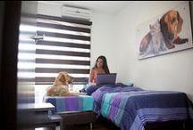 Servicios EVI / Somos una empresa enfocada en la prestación de servicios de salud veterinario en la ciudad de Medellín, contamos con un grupo de médicos especializados en todas las áreas y con instalaciones acondicionadas para brindarte a ti y a tu mascota un servicio completo de atención médica. EVI cuenta con un variado portafolio de productos y servicios desarrollados para el bienestar de tu mascota, ya que ella es nuestra razón de ser.