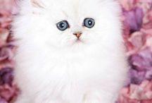 kittens <3 / Cats
